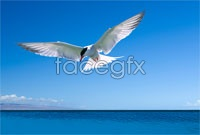 Link toDownload hd picture sea gulls