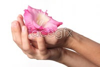 Link toDownload hd picture with flowers