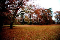 Link toDownload hd pictures fall forest landscape