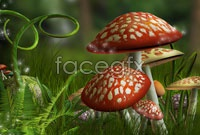 Link toDream forest mushroom pictures hd