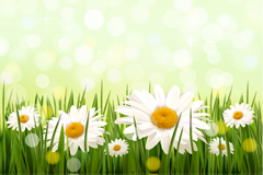 Dreamy daisy flowers vector