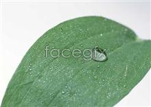 Link toDrop leaf pictures