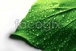 Link toDrops of green leaves psd