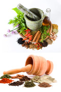 Link toDysplasia of the variety of spices and garlic 1 psd