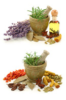 Link toDysplasia of the variety of spices and garlic 2 psd