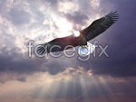 Link toEagles hd pictures psd