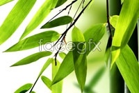 Link toElegant bamboo banner background high definition pictures