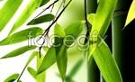 Link toElegant bamboo psd