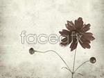 Link toElegant flower psd
