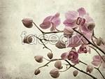 Link toElegant orchid psd