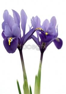 Link toElegant purple flowers high resolution images