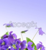 Link toElegant purple flowers psd