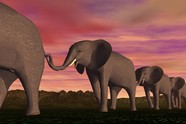 Link toElephant 3d creative design pictures