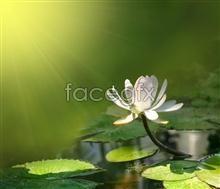 Link toEncyclopedia of lotus hd pictures