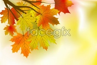 Link toExquisite cartoon maple leaf chinese restaurant background vector 1