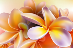 Exquisite frangipani background vector