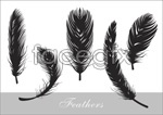 Link toFeather realistic sketches vector