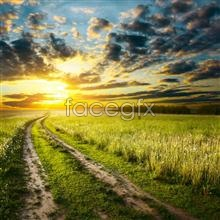 Link toField sky scenery picture