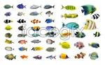Link toFish-2 psd