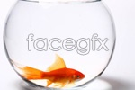 Link toFish tank and fish psd