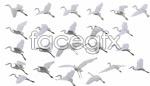 Link toFlight of white crane ridge inscription psd