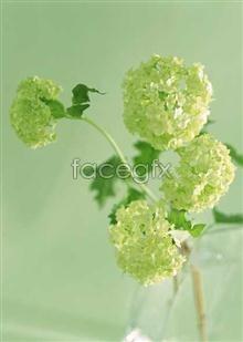 Link toFlower ball flower arrangement