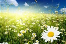 picture landscape Flower