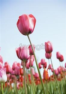Link toFlower pictures 5