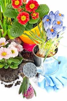 Link toFlower pot high definition pictures