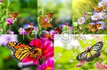 Link toFlowers and butterflies psd