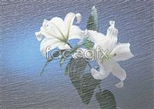 Link to156 features and Flowers