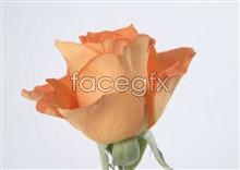 Link toFlowers and features 22