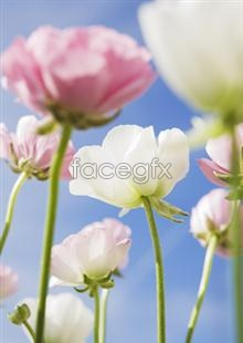Link to2,121 of pictures and Flowers