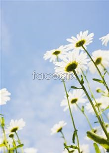 Link to2,135 of pictures and Flowers
