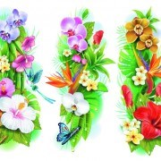 Link to02 set vector borders Flowers
