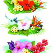 Link to04 set vector borders Flowers