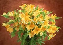 Link to1001 close-up Flowers