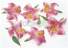 Link to1037 close-up Flowers