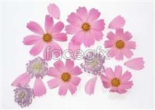 Link to1044 close-up Flowers