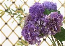 Link toFlowers close-up 1089