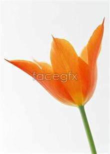 Link to1309 close-up Flowers
