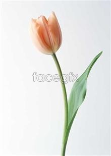Link to1350 close-up Flowers
