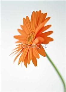 Link to1361 close-up Flowers