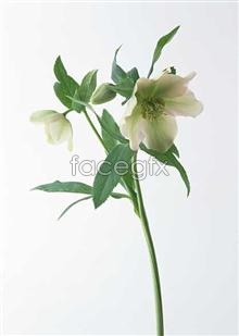 Link to1398 close-up Flowers