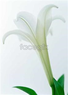 Link to1403 close-up Flowers