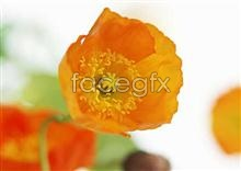 Link to1489 close-up Flowers
