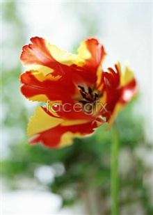 Link to1497 close-up Flowers