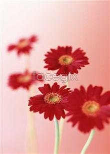 Link to1636 close-up Flowers