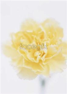 Link to1659 close-up Flowers