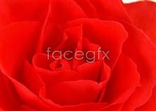 Link to167 close-up Flowers